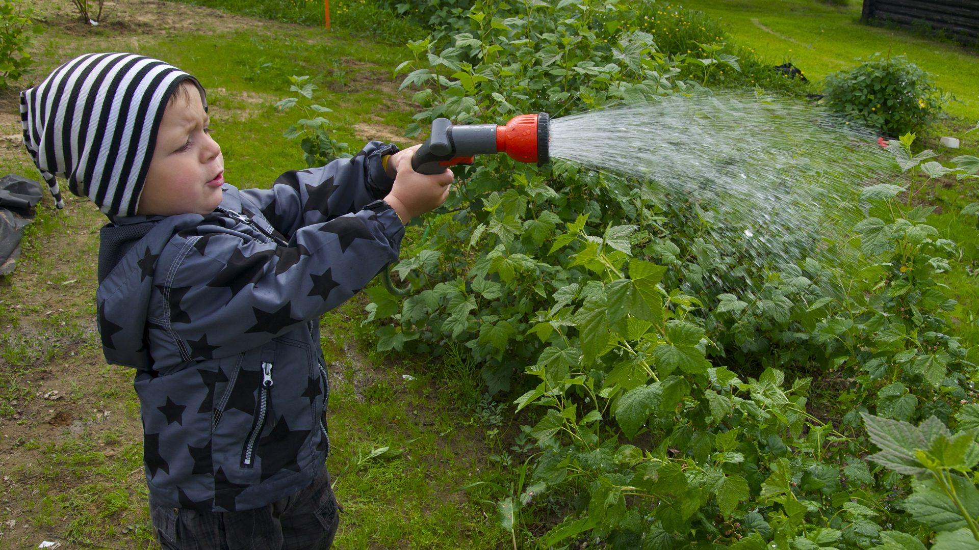 Odla giftfritt i trädgården