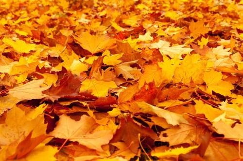 autumn-84714_640-500×333