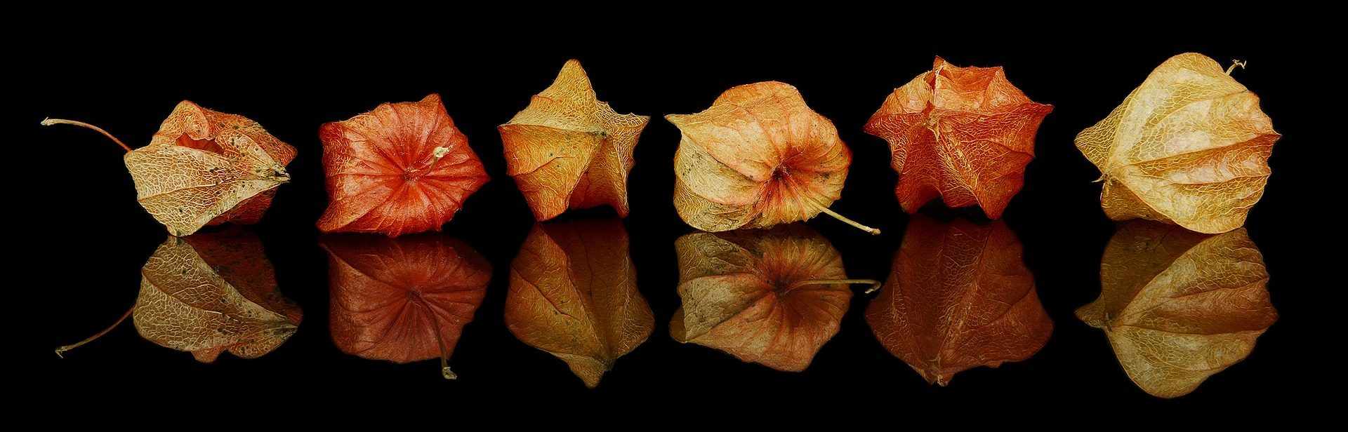fall-decorations-1286757_1920