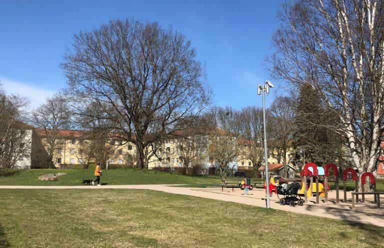 Vy över Brunnsparken. En person går med en hund längs en gångväg. Till höger syns en lekplats med belysning. I bakgrunden står träd.