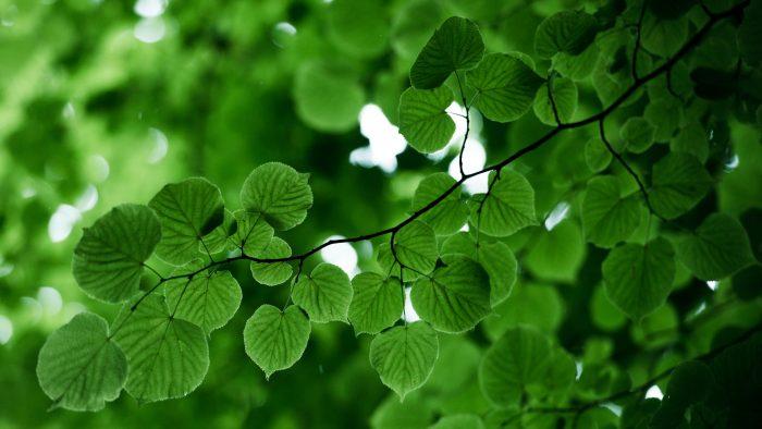 Grönskande blad