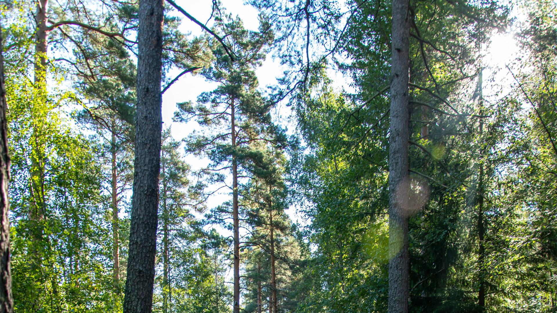 sol skiner genom träd i en skog