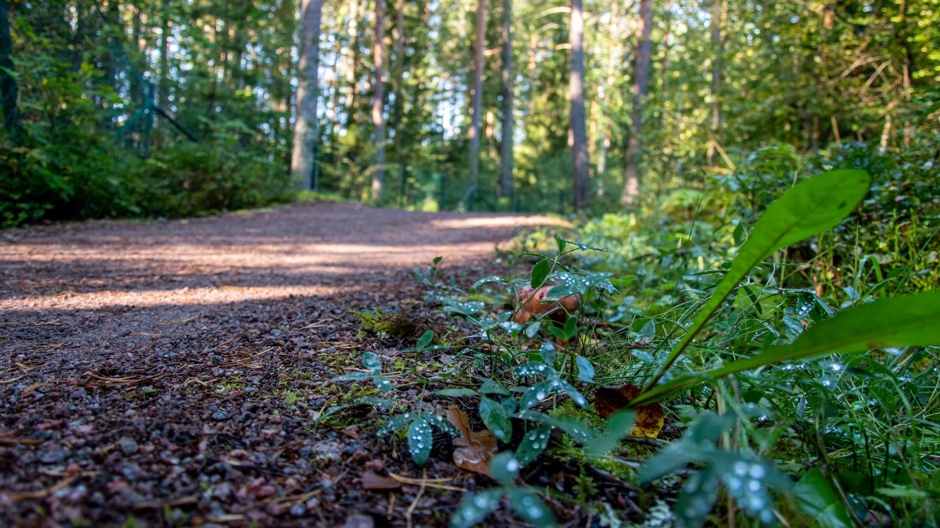 Grusat spår i skogen