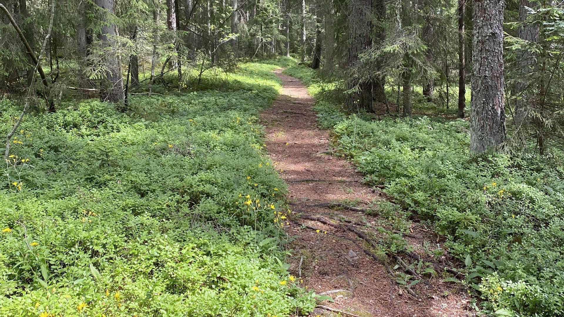 Skog, växtlighet och stig Limön.