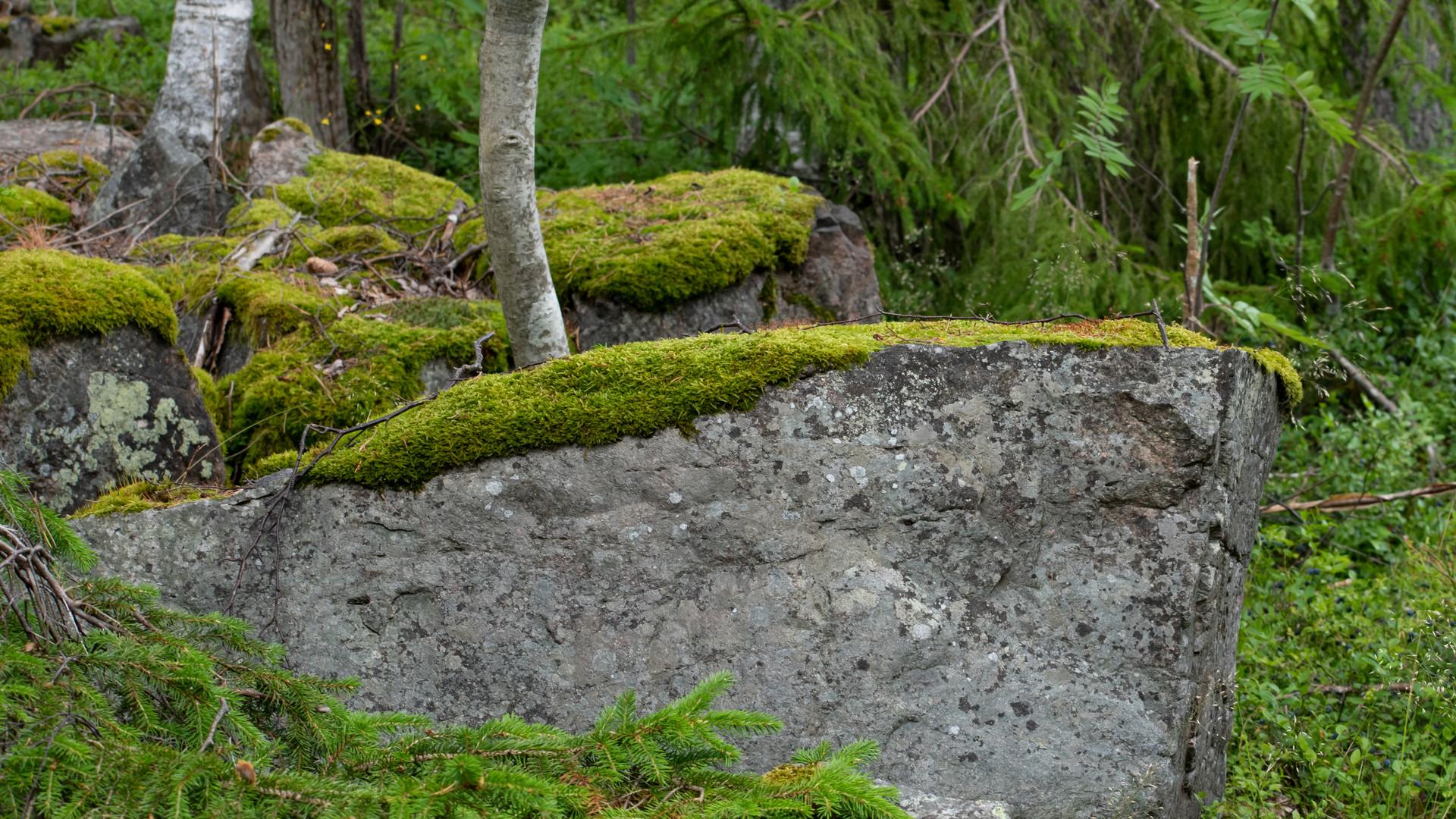 Stenar, mossa och träd