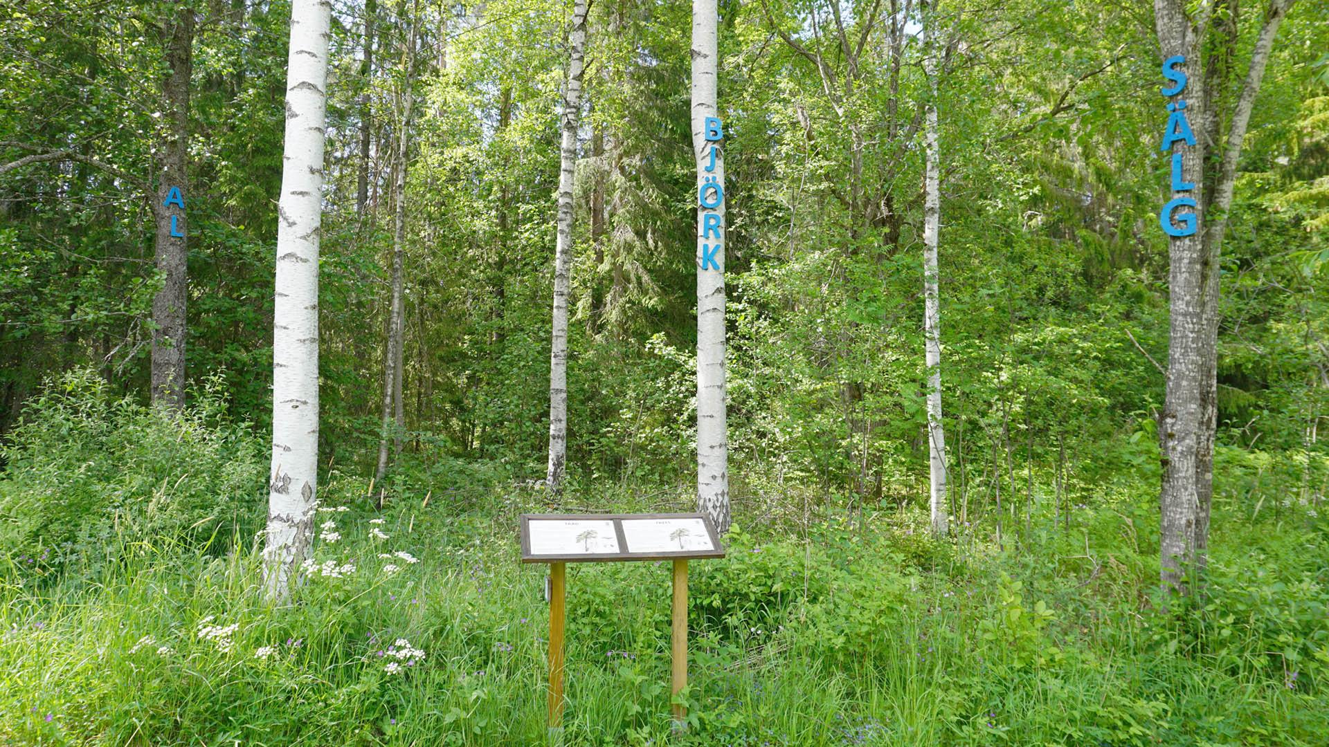 Träd vid Naturstigen i Hemlingby.
