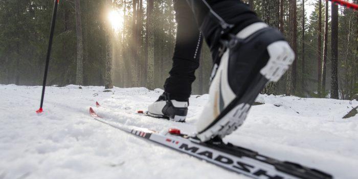 Närbild på skidor i längdskidspår.