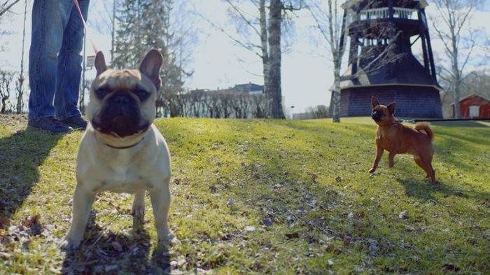 Två kopplade hundar i en park.